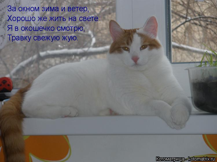 Котоматрица: За окном зима и ветер, Хорошо же жить на свете Я в окошечко смотрю, Травку свежую жую.