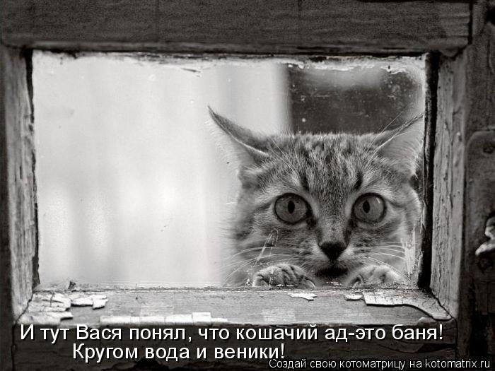 Котоматрица: И тут Вася понял, что кошачий ад-это баня! Кругом вода и веники!