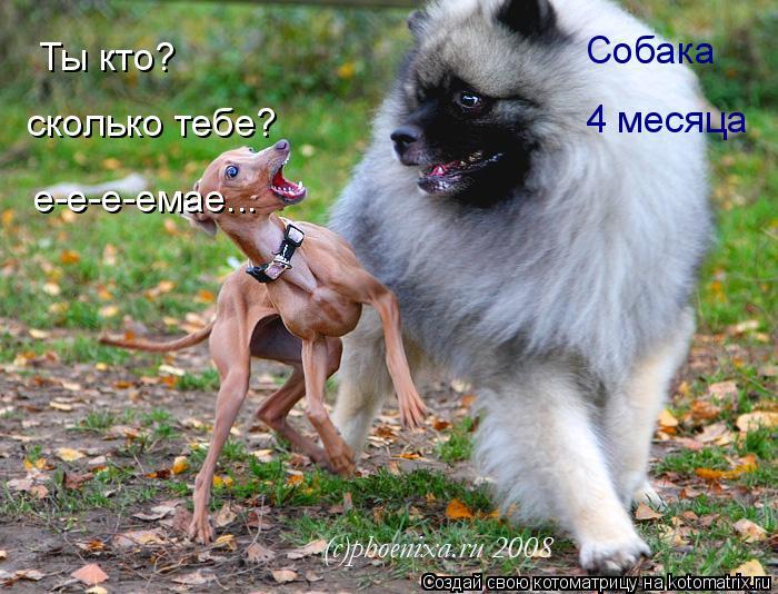 Котоматрица: Ты кто? Собака сколько тебе? 4 месяца е-е-е-емае...