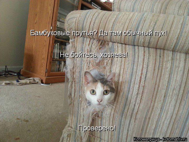 Котоматрица: Бамбуковые прутья? Да там обычный пух! Проверено! Не бойтесь, хозяева!