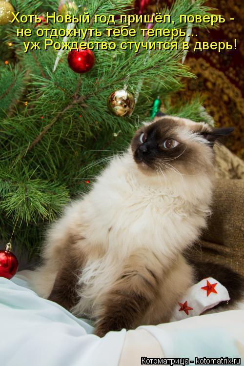 Котоматрица: Хоть Новый год пришёл, поверь -  не отдохнуть тебе теперь... уж Рождество стучится в дверь!