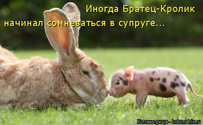 Котоматрица: Иногда Братец-Кролик  начинал сомневаться в супруге...