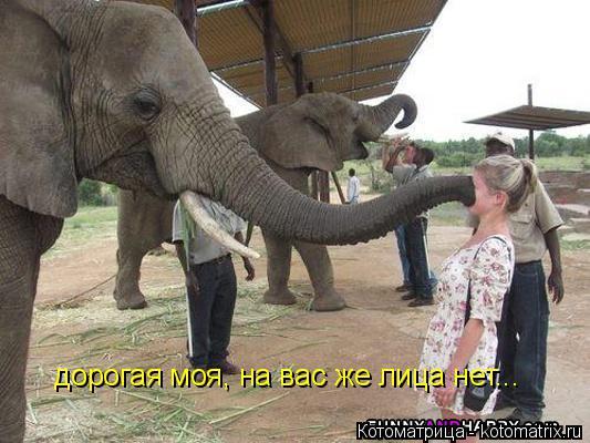 Котоматрица: дорогая моя, на вас же лица нет...