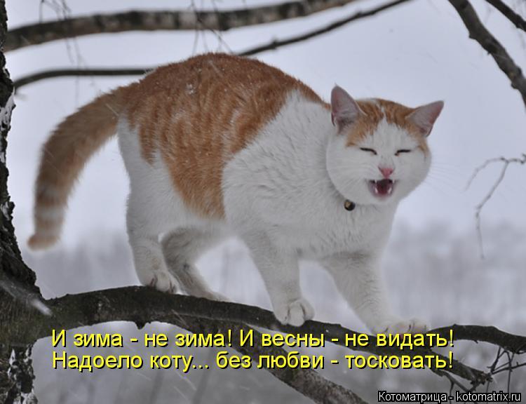 Котоматрица: И зима - не зима! И весны - не видать! Надоело коту... без любви - тосковать!