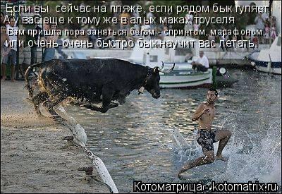 Котоматрица: А у вас еще к тому же в алых маках труселя Если вы  сейчас на пляже, если рядом бык гуляет, Вам пришла пора заняться бегом - спринтом, марафоно