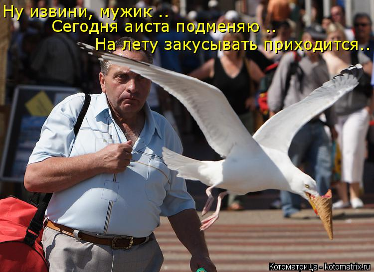 Котоматрица: Ну извини, мужик .. На лету закусывать приходится.. Сегодня аиста подменяю ..