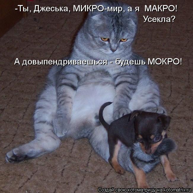 Котоматрица: -Ты, Джеська, МИКРО-мир, а я  МАКРО! Усекла? А довыпендриваешься - будешь МОКРО!