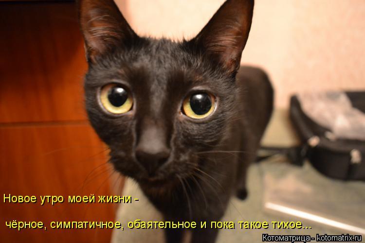 Котоматрица: Новое утро моей жизни -  чёрное, симпатичное, обаятельное и пока такое тихое...