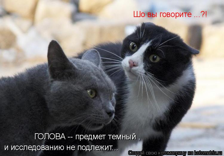 Котоматрица: ГОЛОВА -- предмет темный , и исследованию не подлежит... Шо вы говорите ...?!