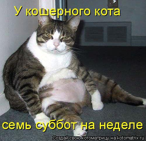 Котоматрица: У кошерного кота семь суббот на неделе