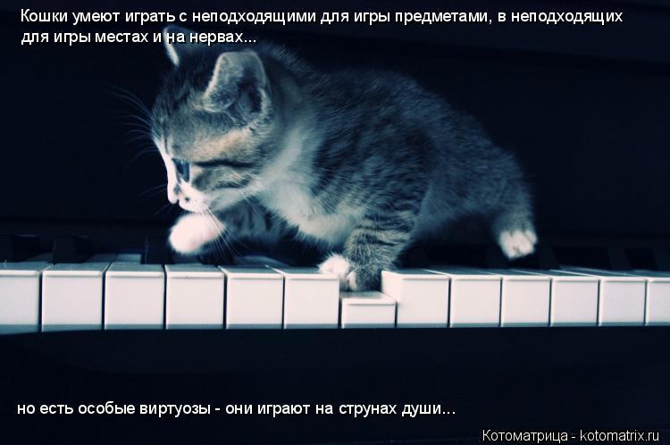 Котоматрица: Кошки умеют играть с неподходящими для игры предметами, в неподходящих для игры местах и на нервах... но есть особые виртуозы - они играют на