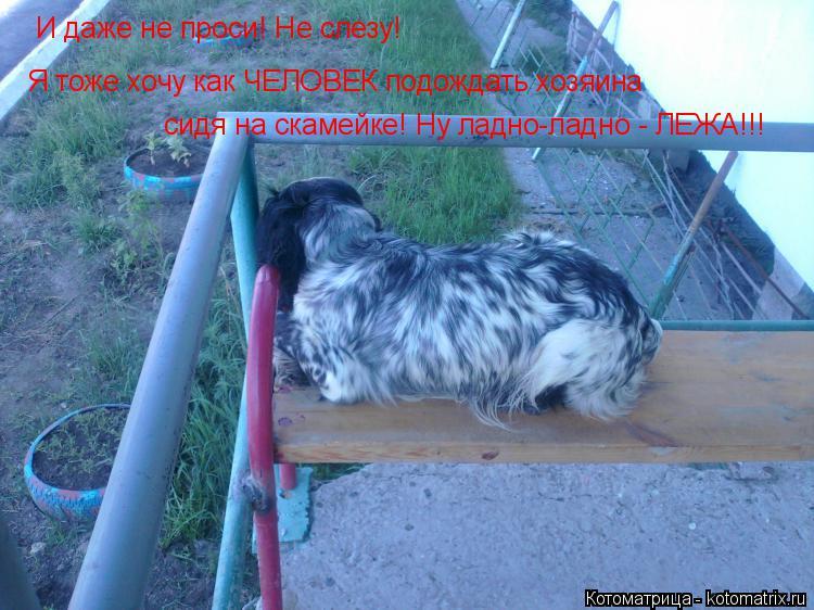 Котоматрица: И даже не проси! Не слезу! Я тоже хочу как ЧЕЛОВЕК подождать хозяина сидя на скамейке! Ну ладно-ладно - ЛЕЖА!!!