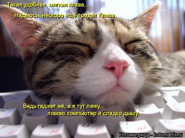 Котоматрица: Такая удобная, мягкая клава... Надеюсь, нескоро ещё придёт Клава. Ведь гаджет её, а я тут лежу, ломаю компьютер и сладко дышу.