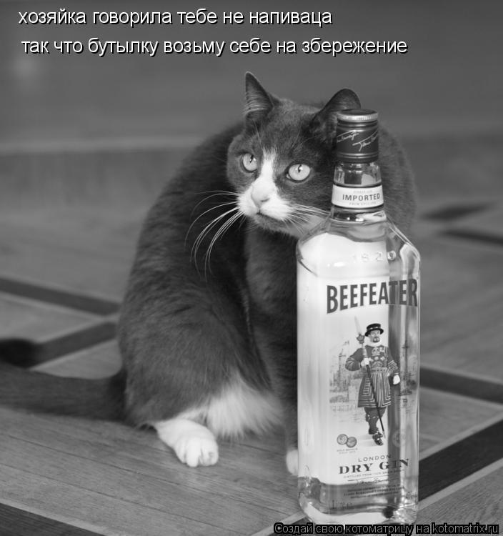 Котоматрица: хозяйка говорила тебе не напиваца так что бутылку возьму себе на збережение