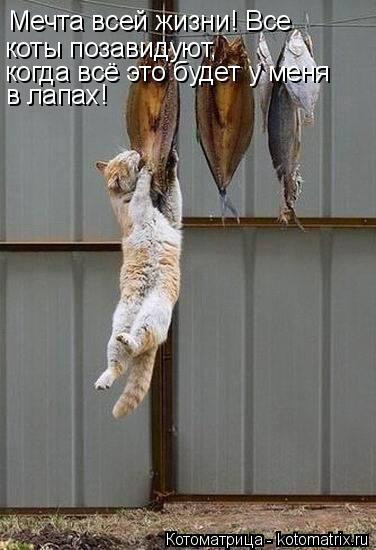Котоматрица: Мечта всей жизни! Все  коты позавидуют, когда всё это будет у меня  в лапах!