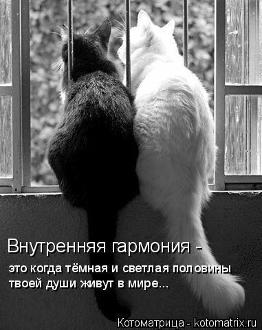 Котоматрица: Внутренняя гармония -  это когда тёмная и светлая половины  твоей души живут в мире...
