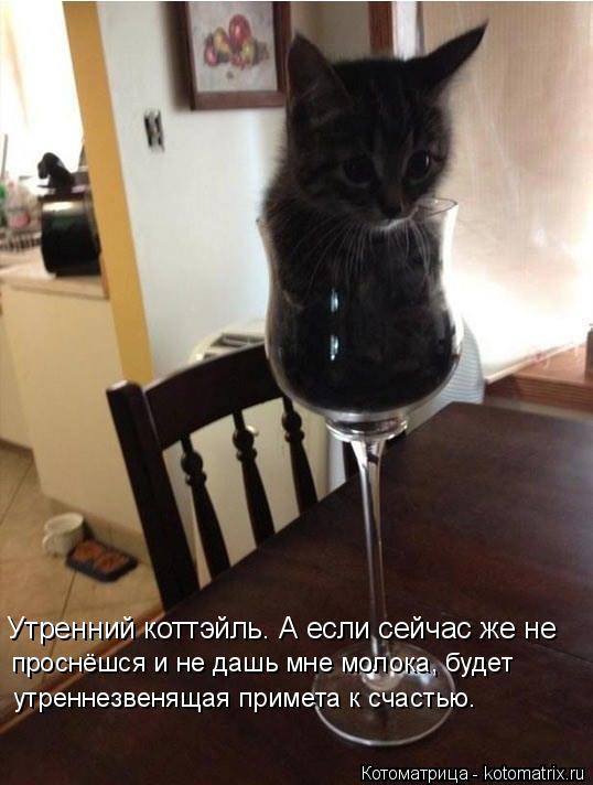 Котоматрица: Утренний коттэйль. А если сейчас же не проснёшся и не дашь мне молока, будет утреннезвенящая примета к счастью.