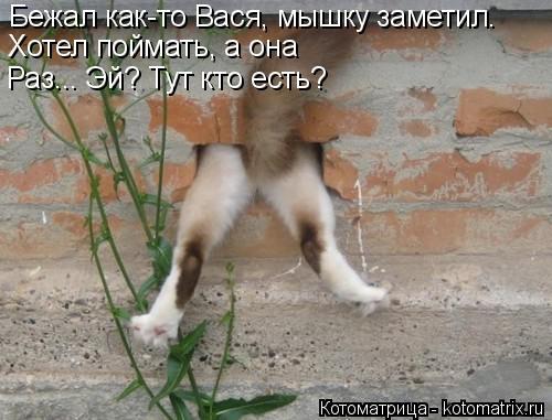 Котоматрица: Бежал как-то Вася, мышку заметил. Хотел поймать, а она Раз...  Раз... Эй? Тут кто есть?