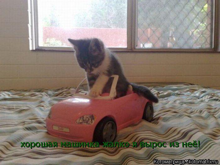 Котоматрица: хорошая машинка жалко я вырос из неё!