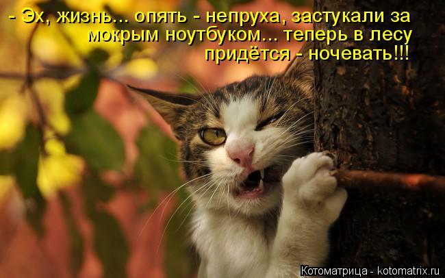 Котоматрица: - Эх, жизнь... опять - непруха, застукали за  мокрым ноутбуком... теперь в лесу придётся - ночевать!!!