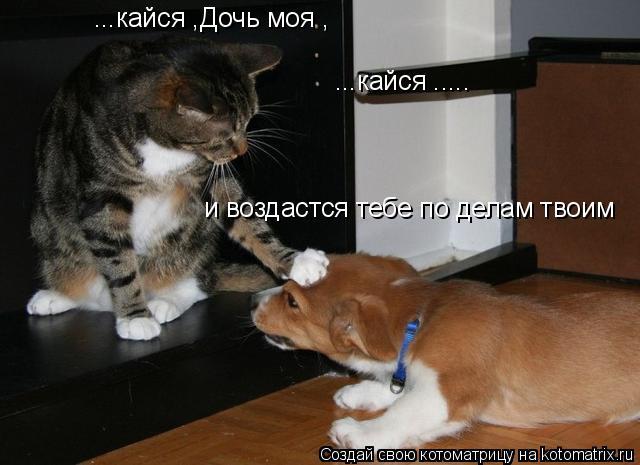 Котоматрица: ...кайся ,Дочь моя , ...кайся ..... и воздастся тебе по делам твоим