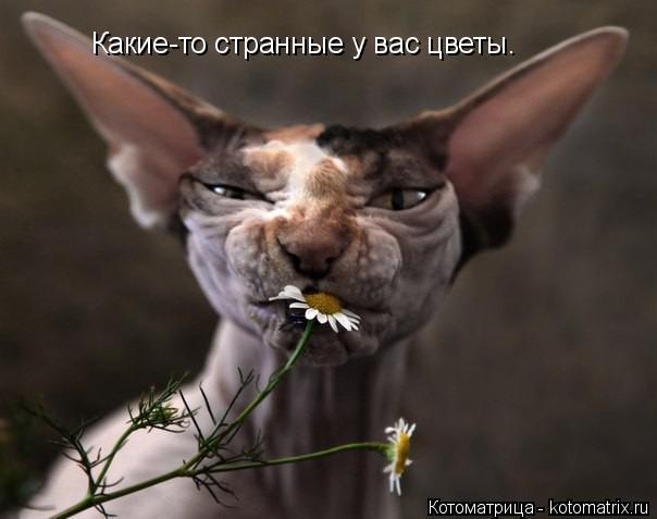 Котоматрица: Какие-то странные у вас цветы.