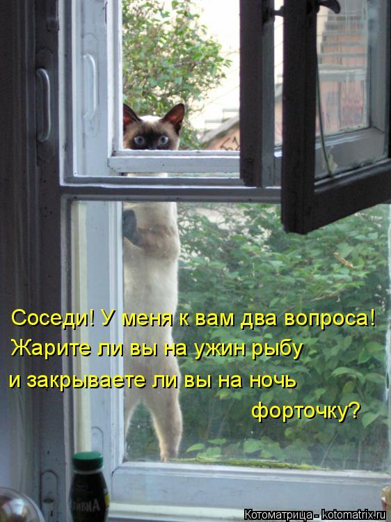 Котоматрица: Соседи! У меня к вам два вопроса! Жарите ли вы на ужин рыбу  и закрываете ли вы на ночь  форточку?