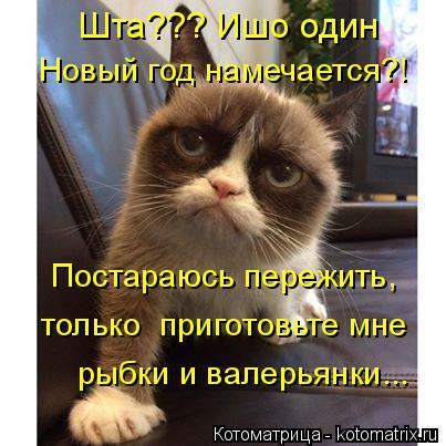 Котоматрица: Шта??? Ишо один  Новый год намечается?! Постараюсь пережить, только  приготовьте мне  рыбки и валерьянки...