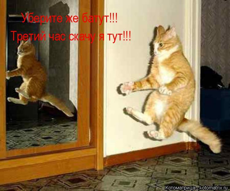 Котоматрица: Уберите же батут!!! Третий час скачу я тут!!!