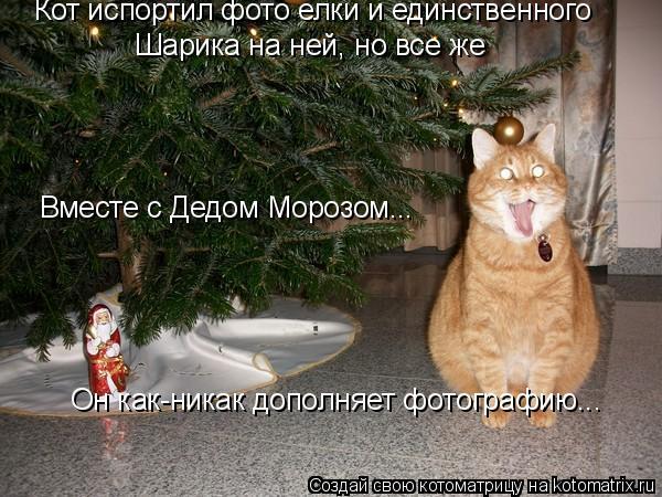 Котоматрица: Кот испортил фото елки и единственного Шарика на ней, но все же Он как-никак дополняет фотографию... Вместе с Дедом Морозом... Вместе с Дедом М