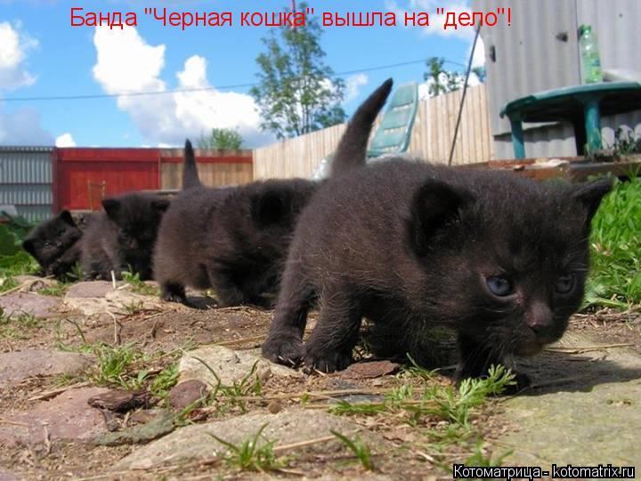 "Котоматрица: Банда ""Черная кошка"" вышла на ""дело""!"