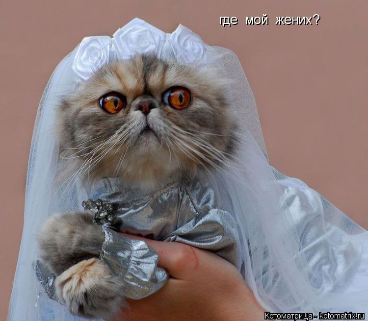 Котоматрица: где  мой  жених?