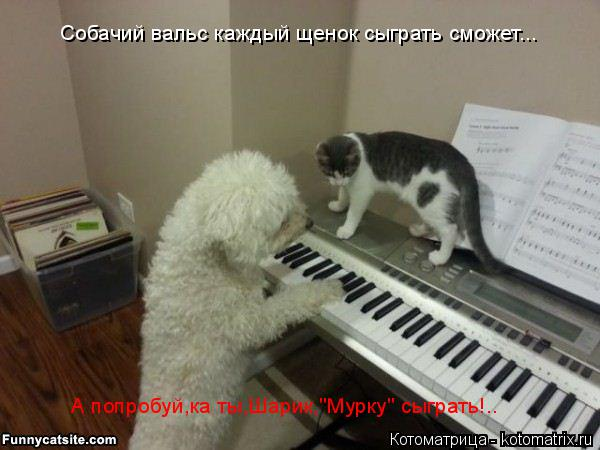 """Котоматрица: Собачий вальс каждый щенок сыграть сможет... А попробуй,ка ты,Шарик,""""Мурку"""" сыграть!.."""