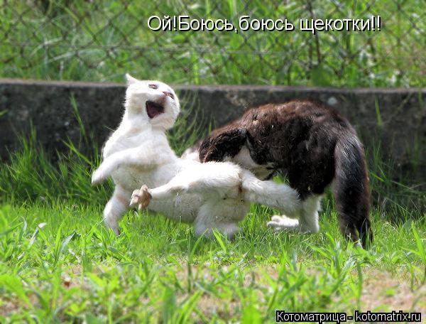 Котоматрица: Ой!Боюсь,боюсь щекотки!!