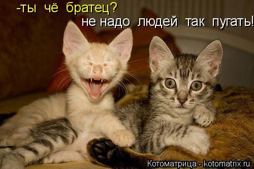 Котоматрица: -ты  чё  братец? не надо  людей  так  пугать!