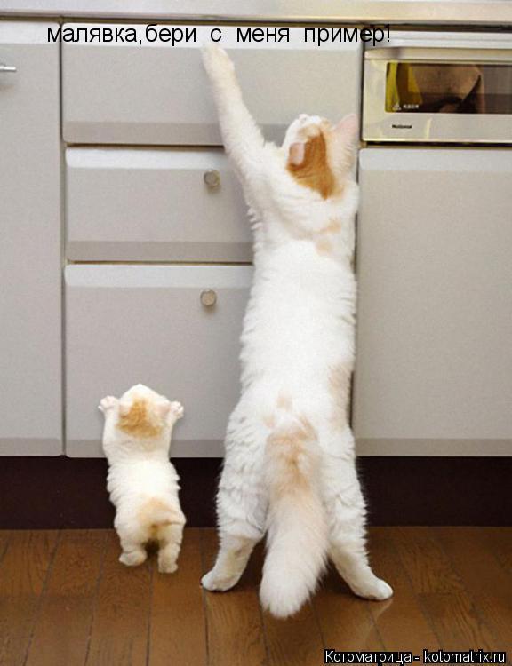 Котоматрица: малявка,бери  с  меня  пример!