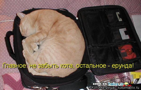 Котоматрица: Главное: не забыть кота, остальное - ерунда!