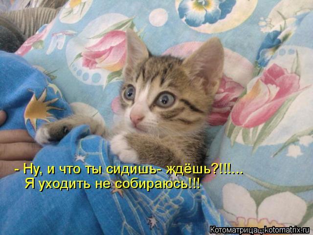Котоматрица: - Ну, и что ты сидишь- ждёшь?!!!... Я уходить не собираюсь!!!