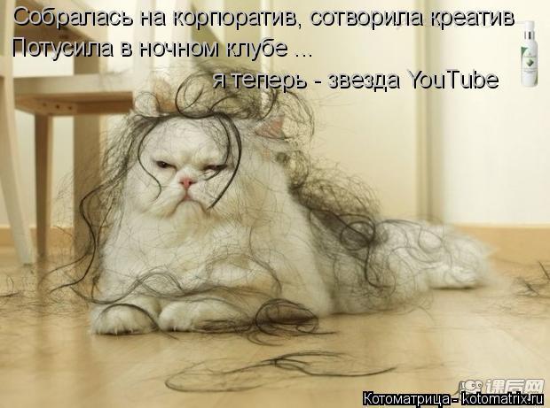 Котоматрица: Собралась на корпоратив, сотворила креатив Потусила в ночном клубе ... я теперь - звезда YouTube