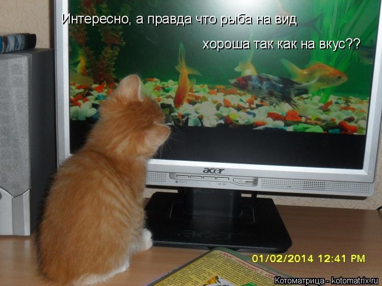 Котоматрица: Интересно, а правда что рыба на вид хороша так как на вкус??