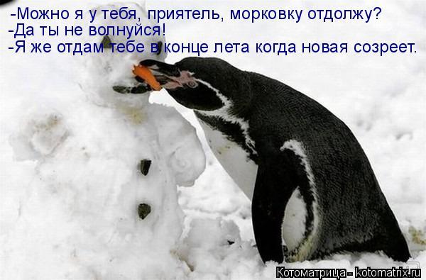 Котоматрица: -Можно я у тебя, приятель, морковку отдолжу? -Да ты не волнуйся! -Я же отдам тебе в конце лета когда новая созреет.