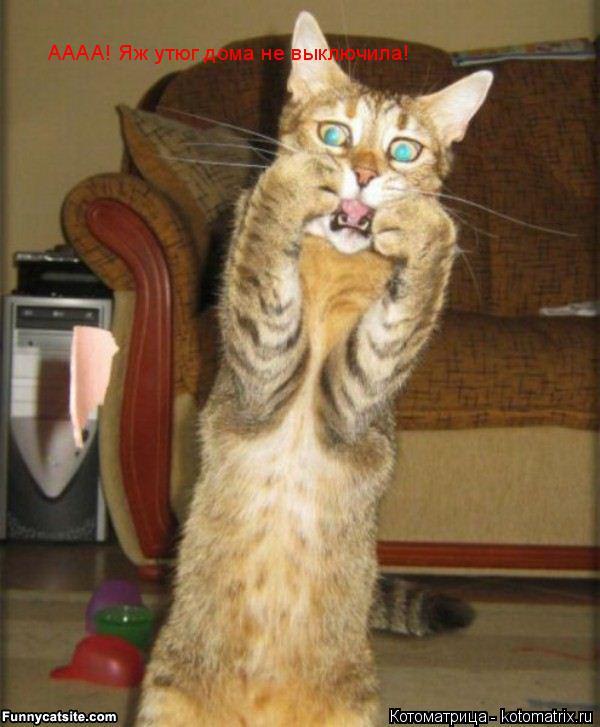 Котоматрица: АААА! Яж утюг дома не выключила!