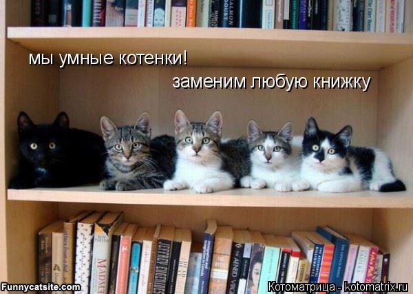 Котоматрица: мы умные котенки!  заменим любую книжку
