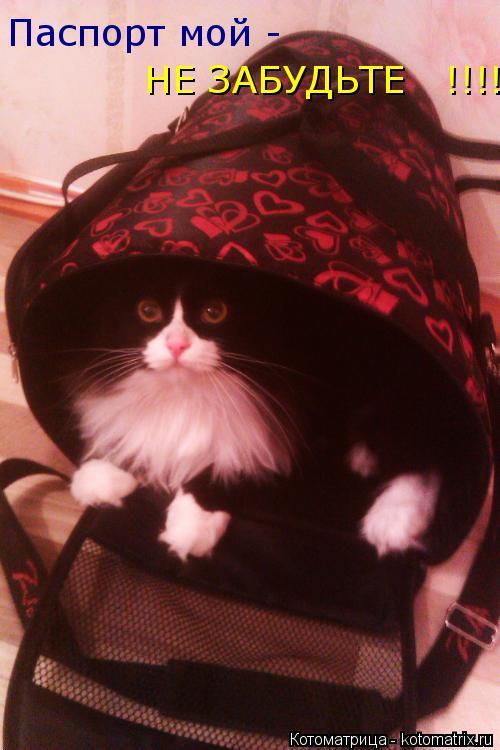 Котоматрица: Паспорт мой - НЕ ЗАБУДЬТЕ   !!!!