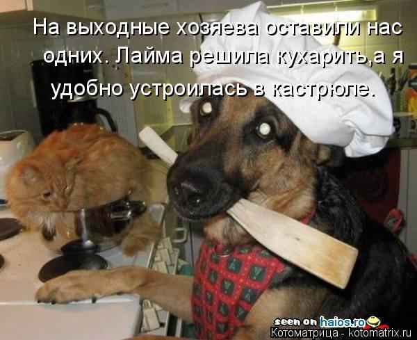 Котоматрица: На выходные хозяева оставили нас одних. Лайма решила кухарить,а я удобно устроилась в кастрюле.