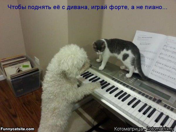 Котоматрица: Чтобы поднять её с дивана, играй форте, а не пиано...