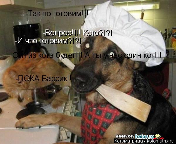 Котоматрица: -Вопрос!!!! Кого?!?! -Так по готовим!!! -И что готовим?!?! -Суп из кота будет!!! А ты у нас один кот!!!  -ПОКА Барсик!!