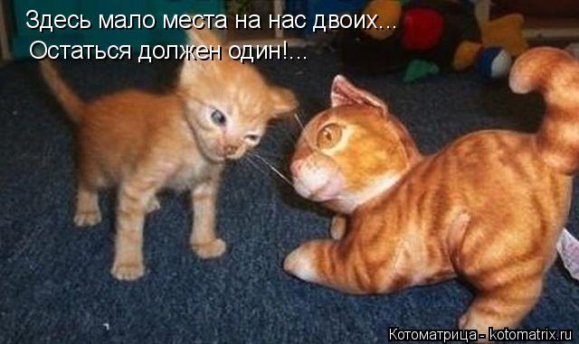 Котоматрица: Здесь мало места на нас двоих... Остаться должен один!...
