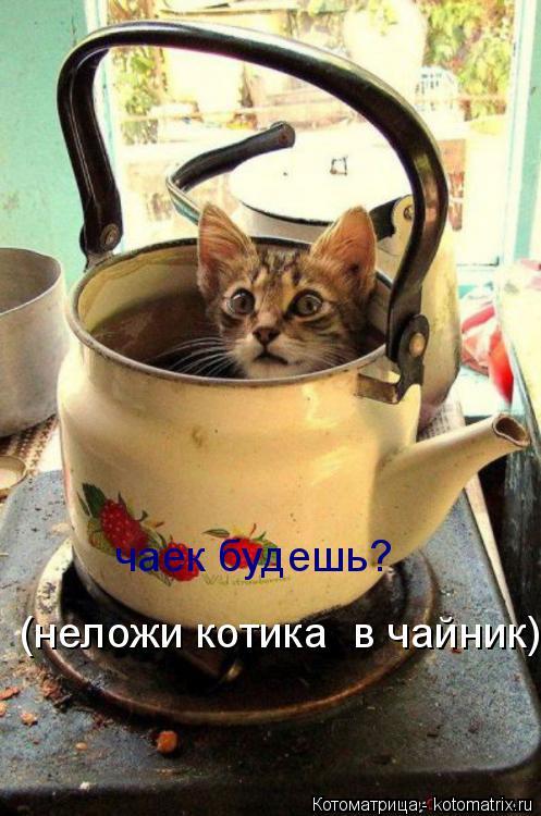 Котоматрица: чаек будешь? (неложи котика  в чайник)