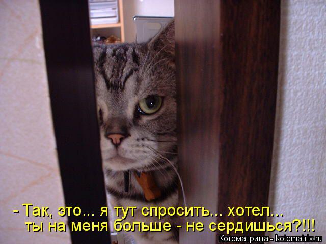 Котоматрица: - Так, это... я тут спросить... хотел... ты на меня больше - не сердишься?!!!